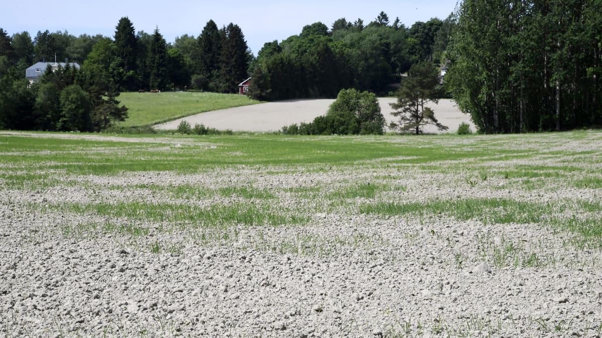 Kuivaa peltoa Vantaalla 3. kesäkuuta.