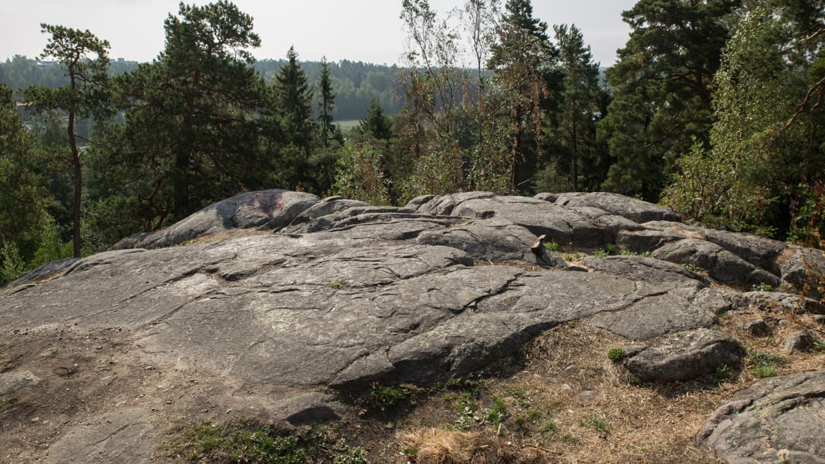 Näkymä Vartiokylän linnavuorelta Vartiokylänlahdelle päin