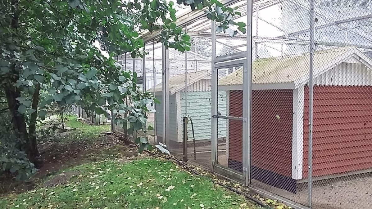 Lintuhäkkejä Tampereen Sorsapuistossa