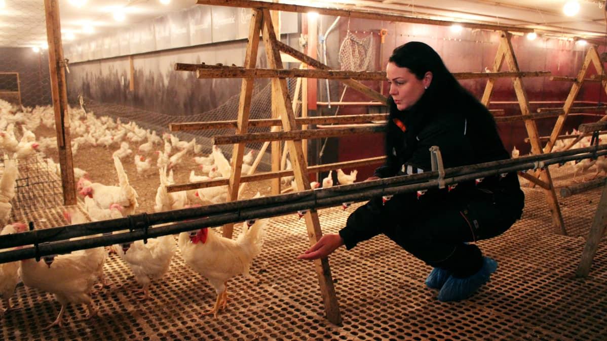 Niina Vatanen ruokkimassa kanaa.