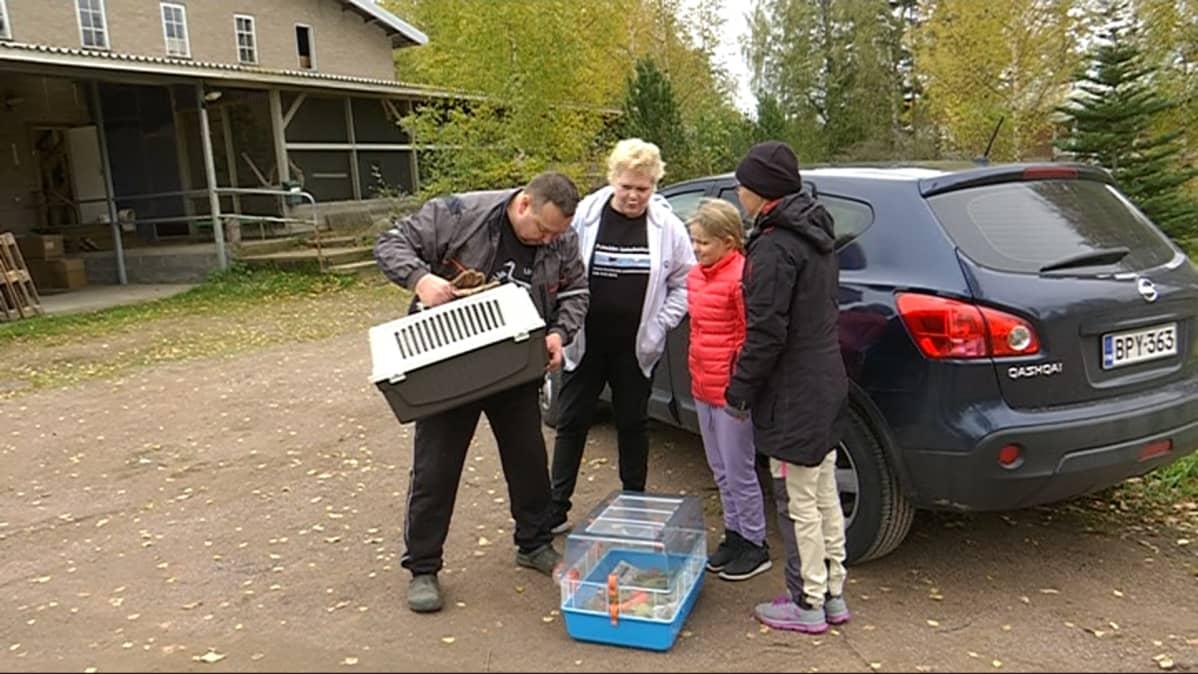 Arto (vas.) ja Hannele Hokkanen ottivat vastaan villin siilin, jonka Minni ja Mirka Aho toivat hoitoon Pyhtään lintuhoitolaan lokakuussa 2018.