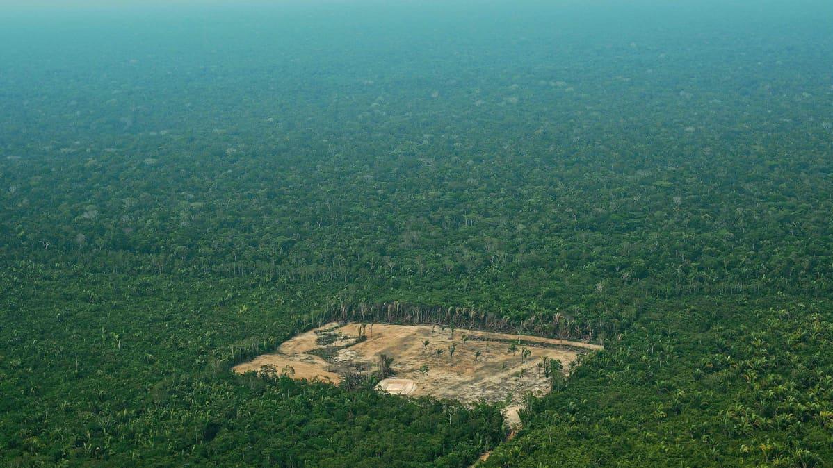 Hakkuuaukea Amazonin sademetsässä.
