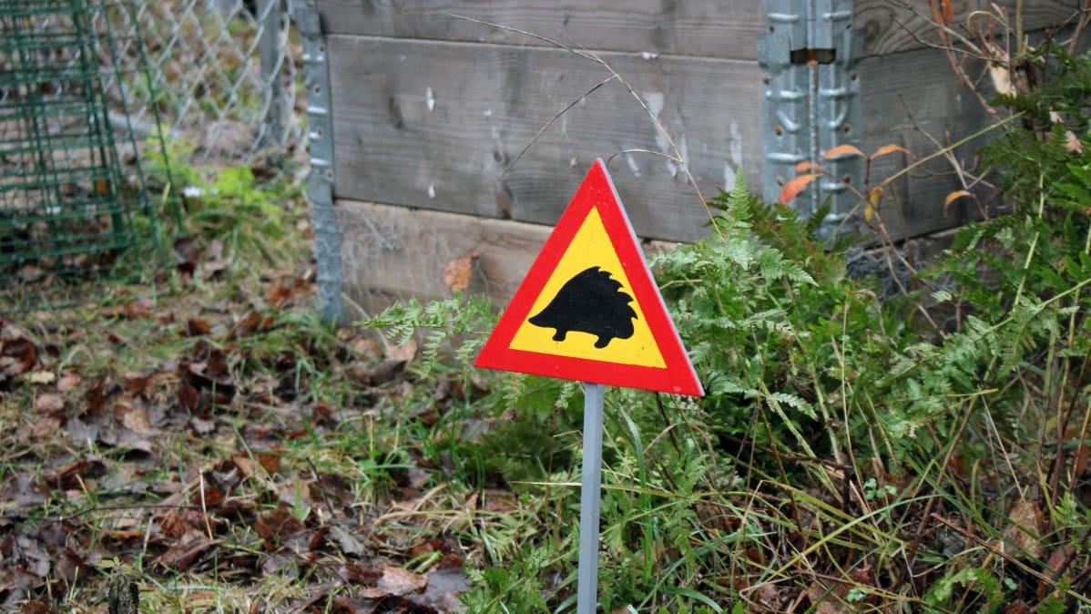 Siilihoitolan pihamaalla on siilien horrospesien edessä siilivaara-liikennemerkki.