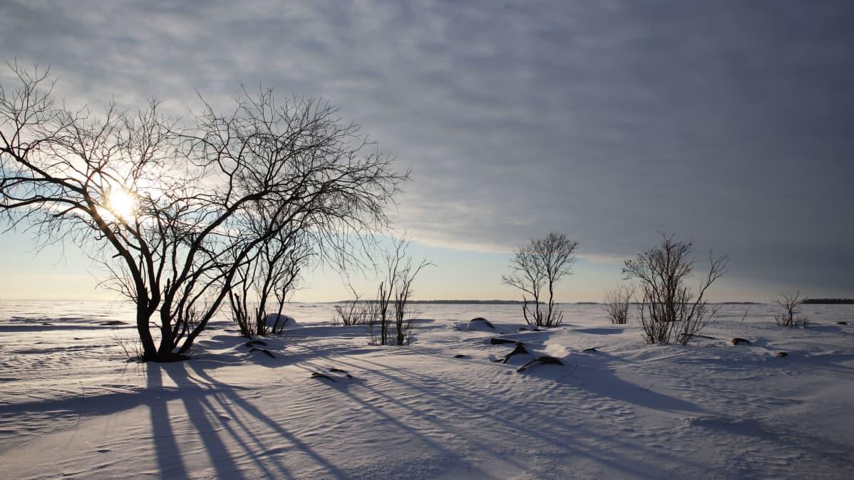 Pieni luoto Perämerellä. Korviahivelevän hiljaisuuden voi tavoittaa esimerkiksi Lapin tuntureilla ja Perämeren jäällä. Kaupungistumisen myötä täydellinen äänettömyys on eksoottista yhä useammalle maailman ihmiselle.