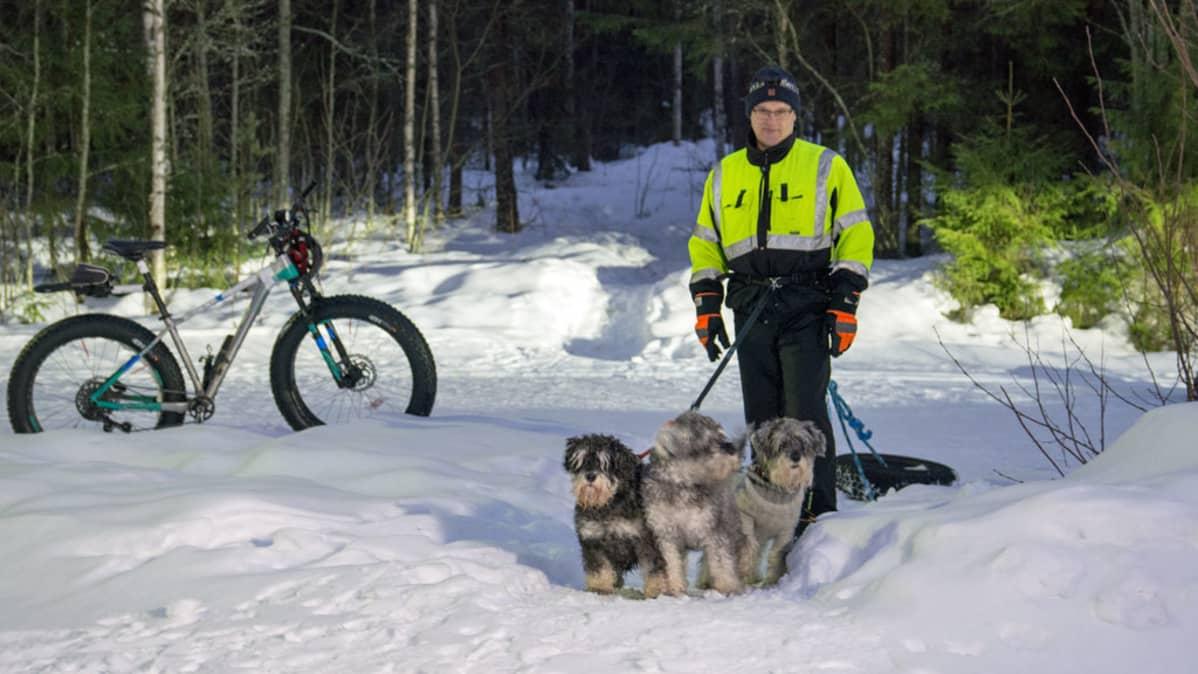 Mies kulkee polkua koirien kanssa vetäen autonrengasta perässään.