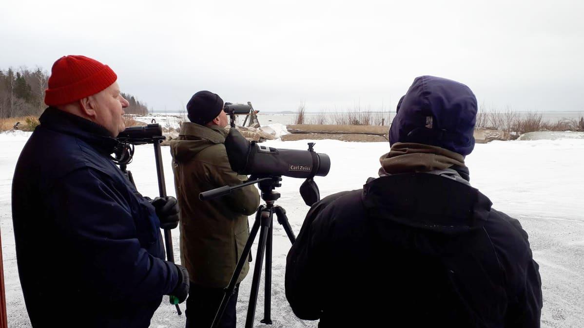 Punapipoinen Matti Maskulin on aktiivinen lintuharrastaja. Kevätmuuton aikaan riittää katseltavaa.