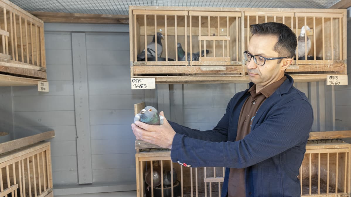Mehmet Cevirel aloitti kyyhkysharrastuksen jo teini-iässä Turkissa.