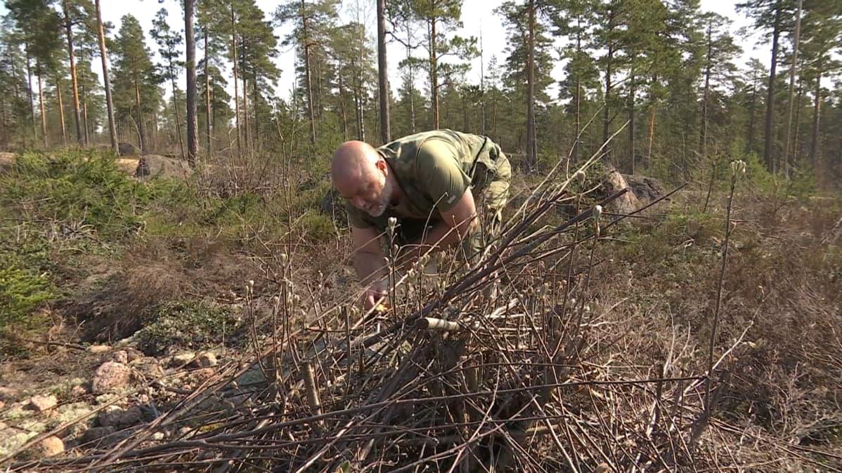 Mikko Turunen etsii käärmeitä risukasasta Kotkan Räskissä
