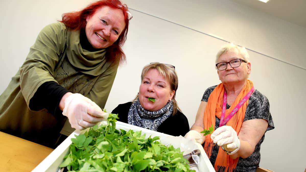Kolme naista esittelee laatikkoa, johon on kerätty vuohenputkea