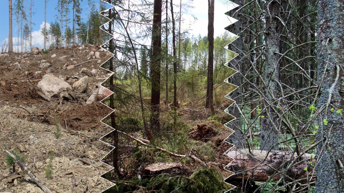 Eri tavoin käsiteltyjä metsäaloja