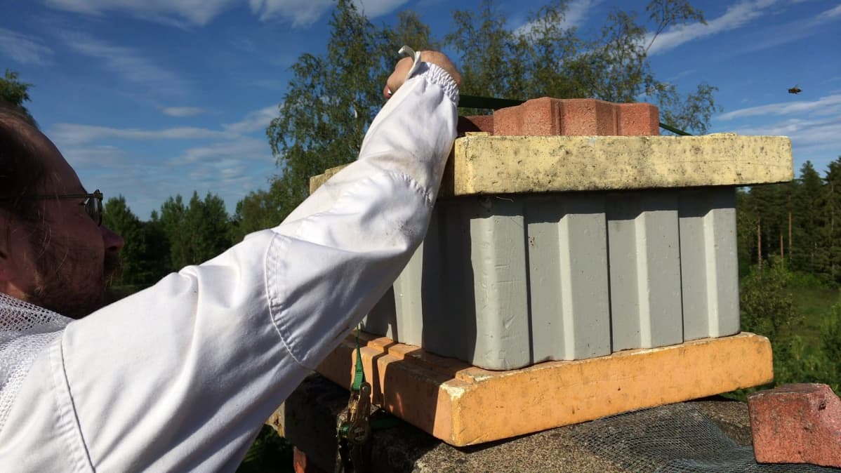 Hannu Luukinen asettaa mehiläispesää houkuttimeksi piipun päälle