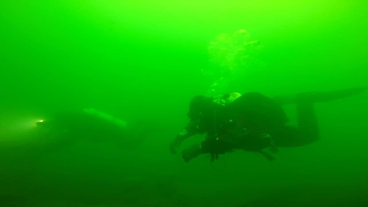 Sukeltajia vedessä