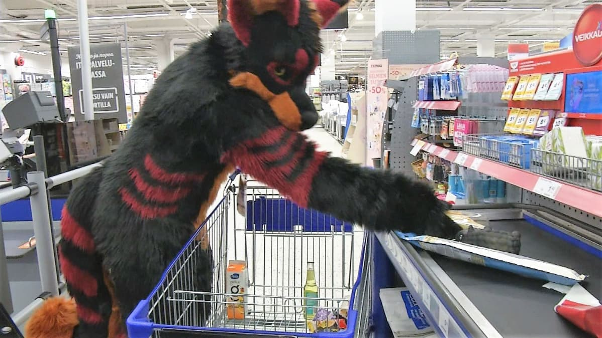 Susikettu turripukuun pukeutunut henkilö, kaupan kassalla laittamassa ostoksiaan kaupanhihnalle.
