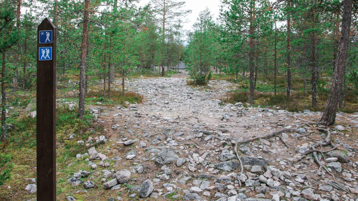 Kivikolle kulunut vaellusreitti Rovaniemen Ounasvaaralla.