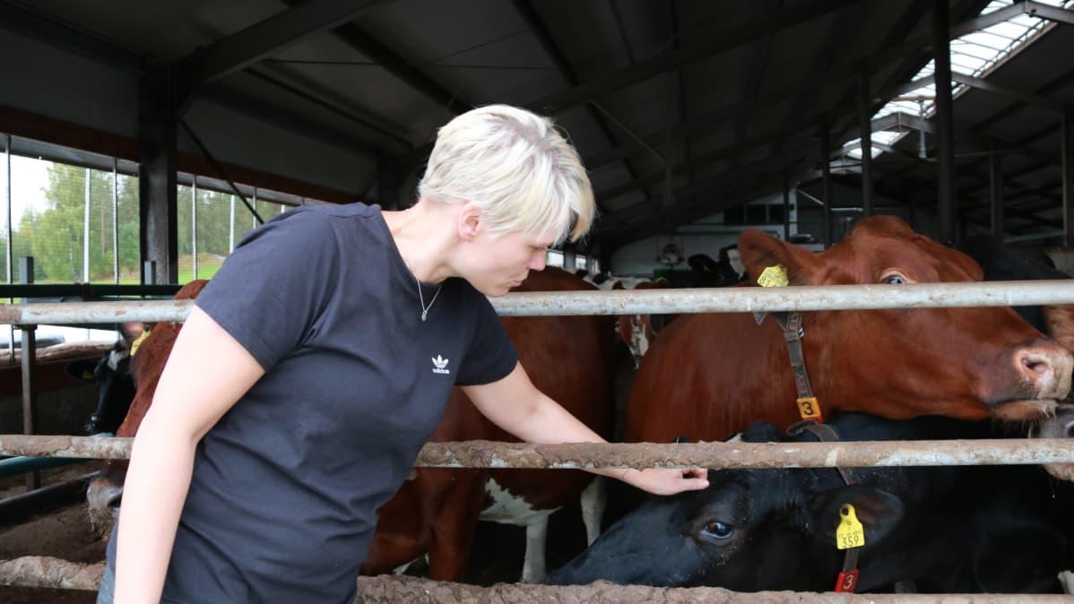 Nainen silittää lehmiä