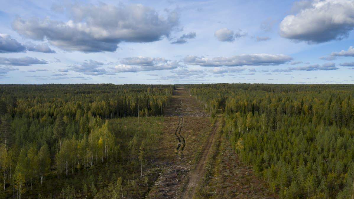 Raivattua metsää Pyhännälle, voimalinjoille paikka.
