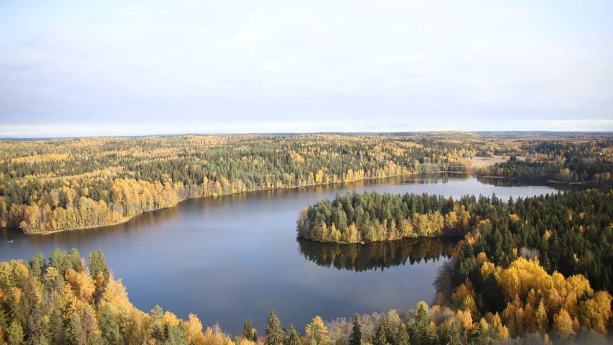 Kuva Aulangon näkötornilta alas Alunganjärvelle ja Lusikkaniemeen.