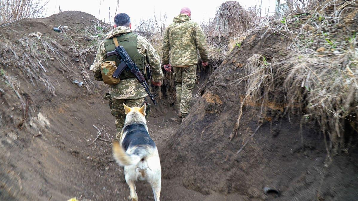 Koiria ja kissoja on paljon Ukrainan etulinjassa. Ne muun muassa varoittavat, kun havaitsevat ääniä ja hajuja.