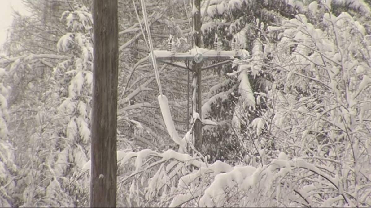 Luminen sähkölinja puiden keskellä.