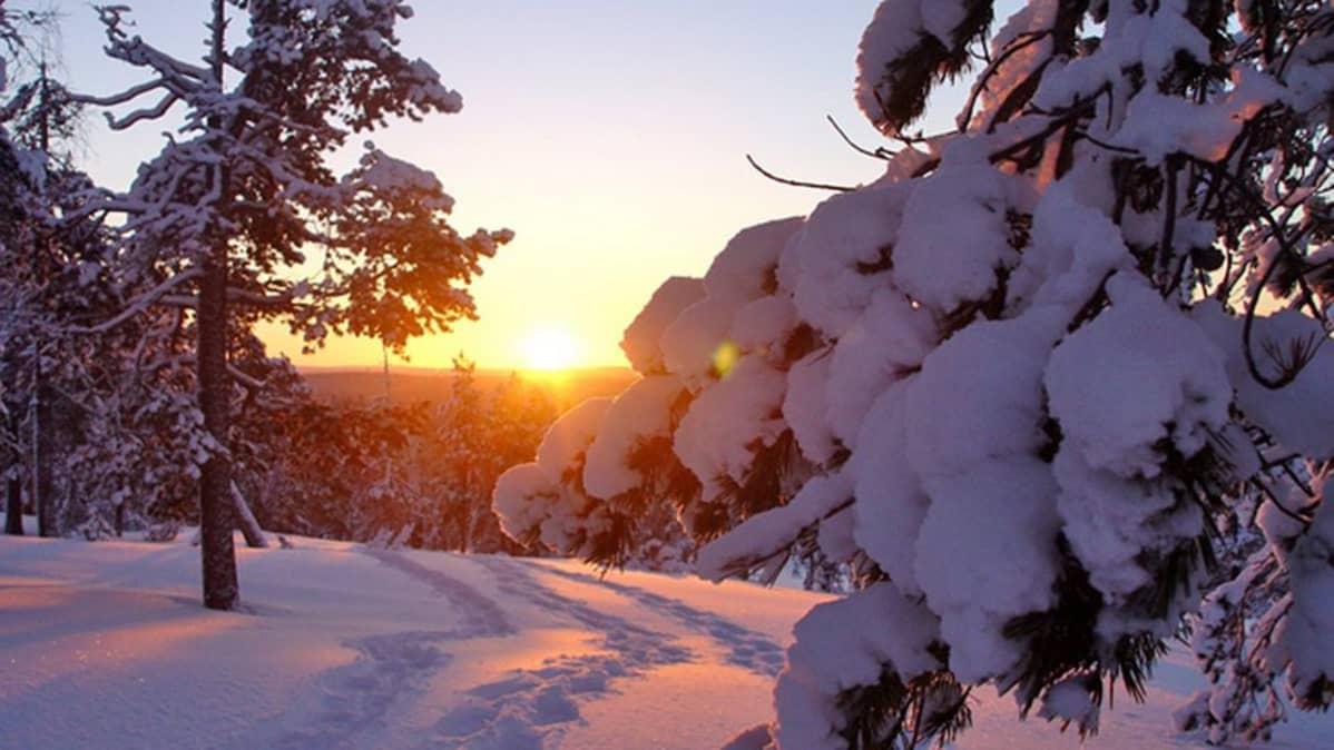 Luminen metsä