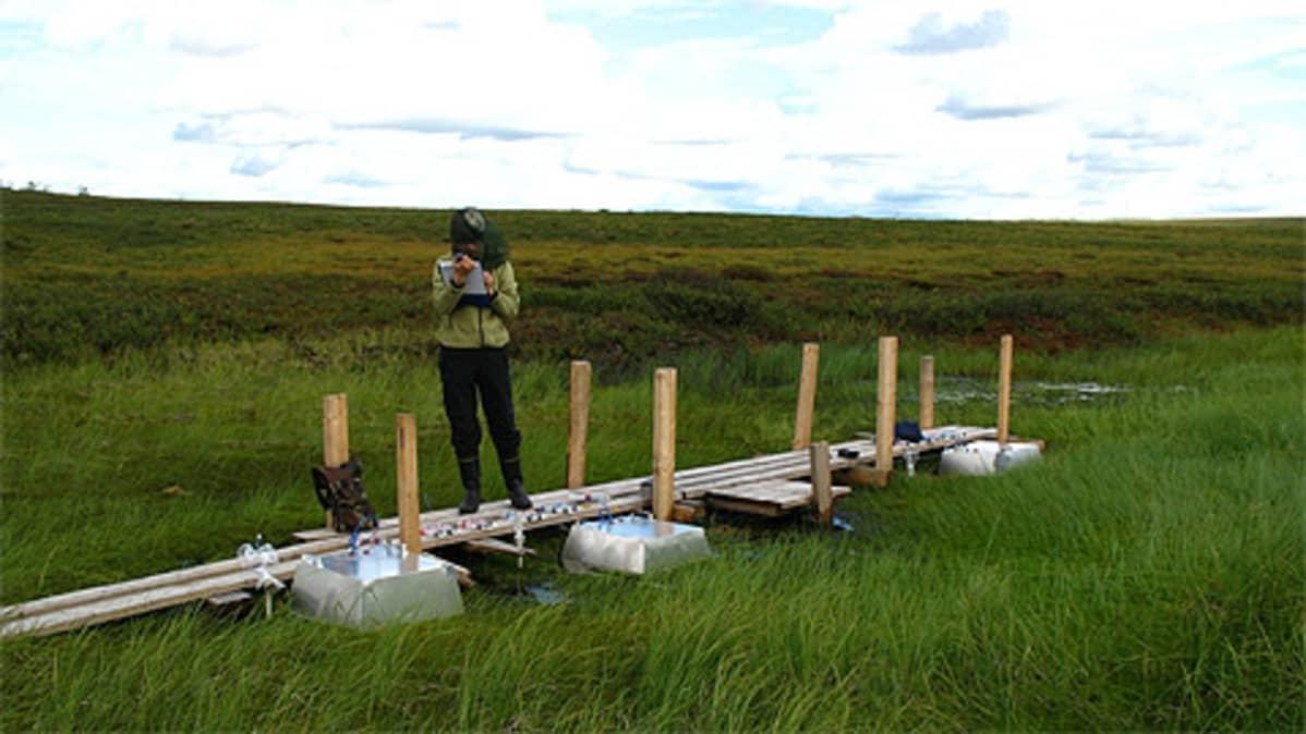 Kuopion yliopiston tutkija Saara Lind mittaa ikiroudasta vapautuvia kasvihuonekaasuja.