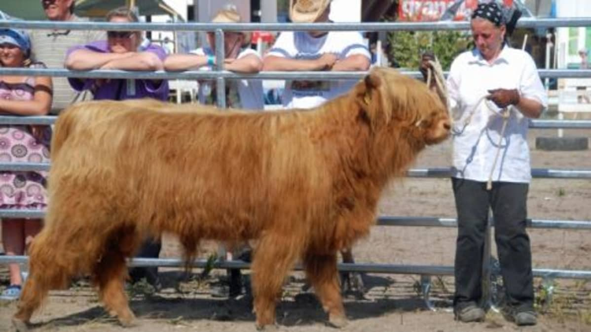 Suomen Highland Cattle Club ry