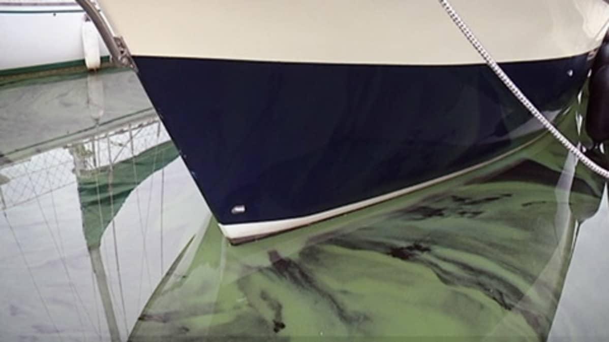 Sinilevää Lappeenrannan satamassa.