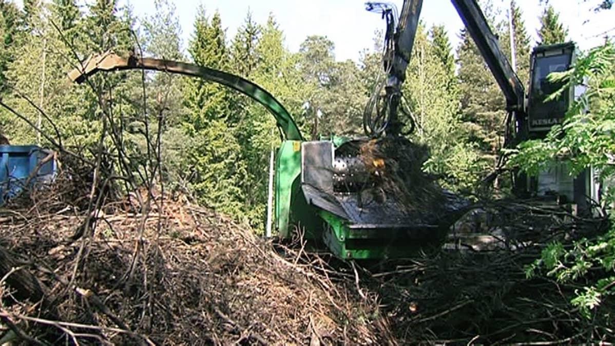 Metsätyökone hakettaa risuja.