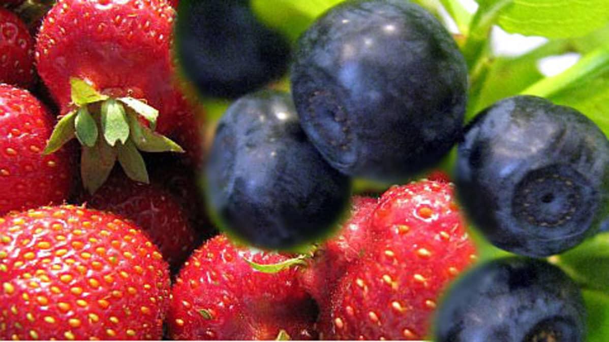 mansikoita ja mustikoita