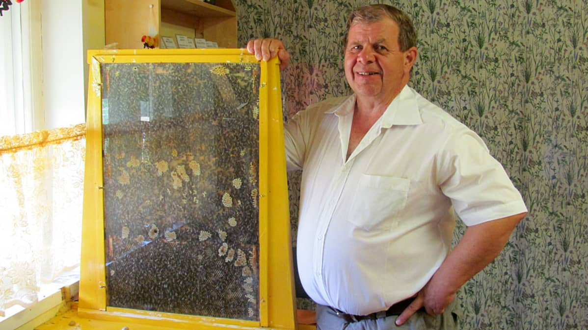 Markku Nieminen ja lasinen mehiläispesä