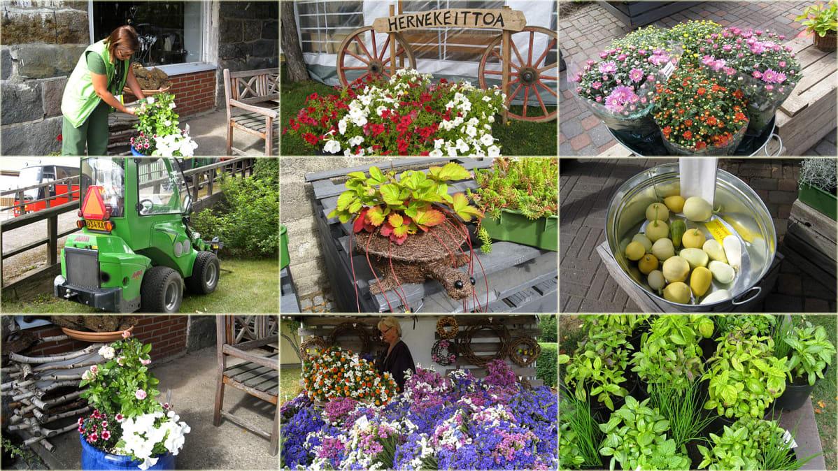 Kukkaloistoa puutarha-alan messuilla