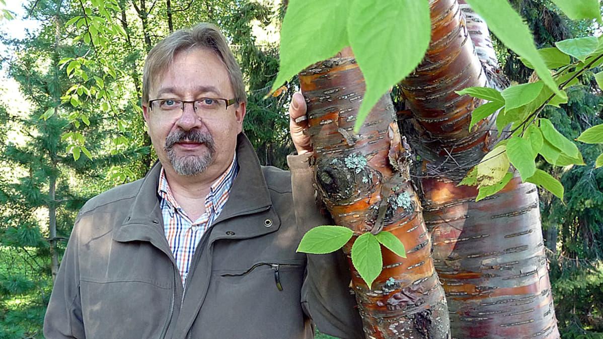 Business Oulun johtaja Juha Alamursula osallistui Kiipeä puuhun -viikkoon Oulun Ainolan puistossa.