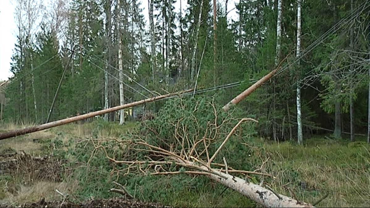 Tuulen kaatamia puita sähkölinjalla Espoossa.