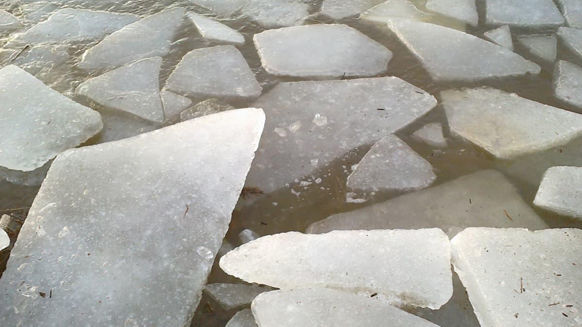 Kuvassa jäälohkareita meressä
