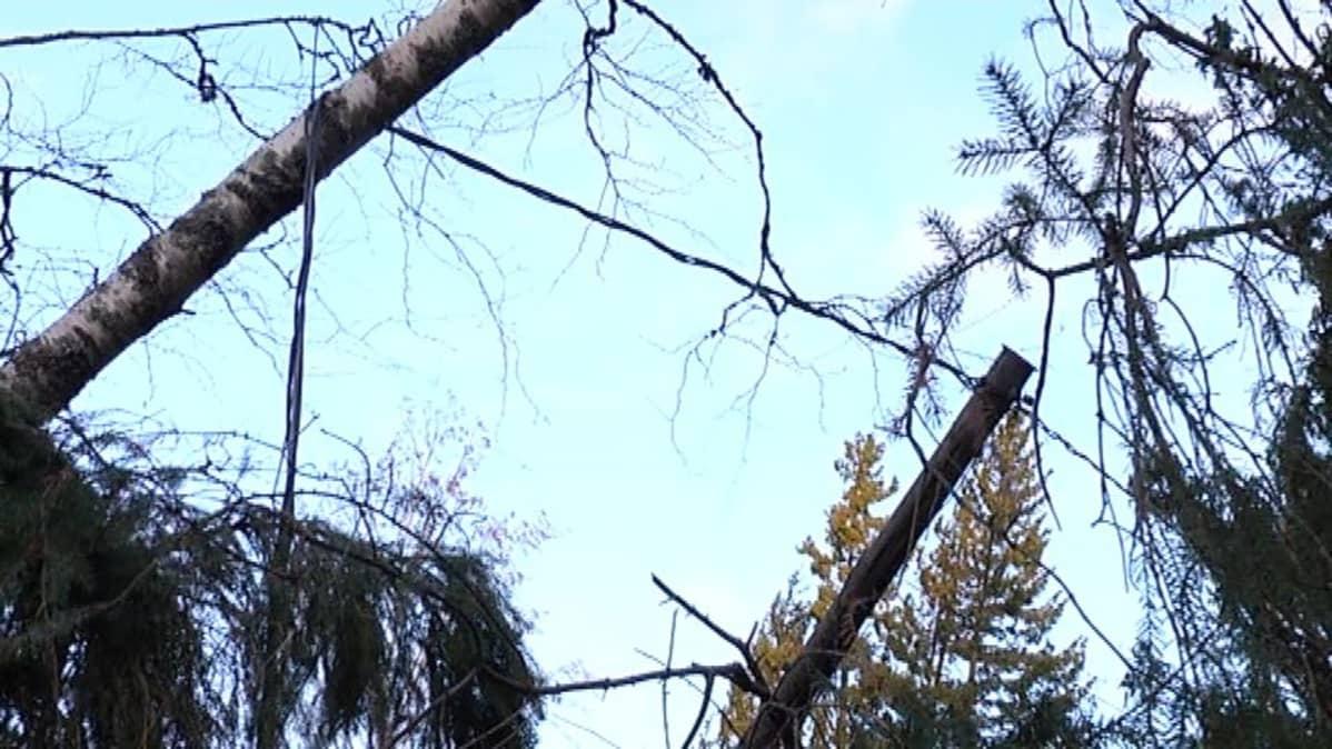 Puu kaatunut puhelinlinjalle.