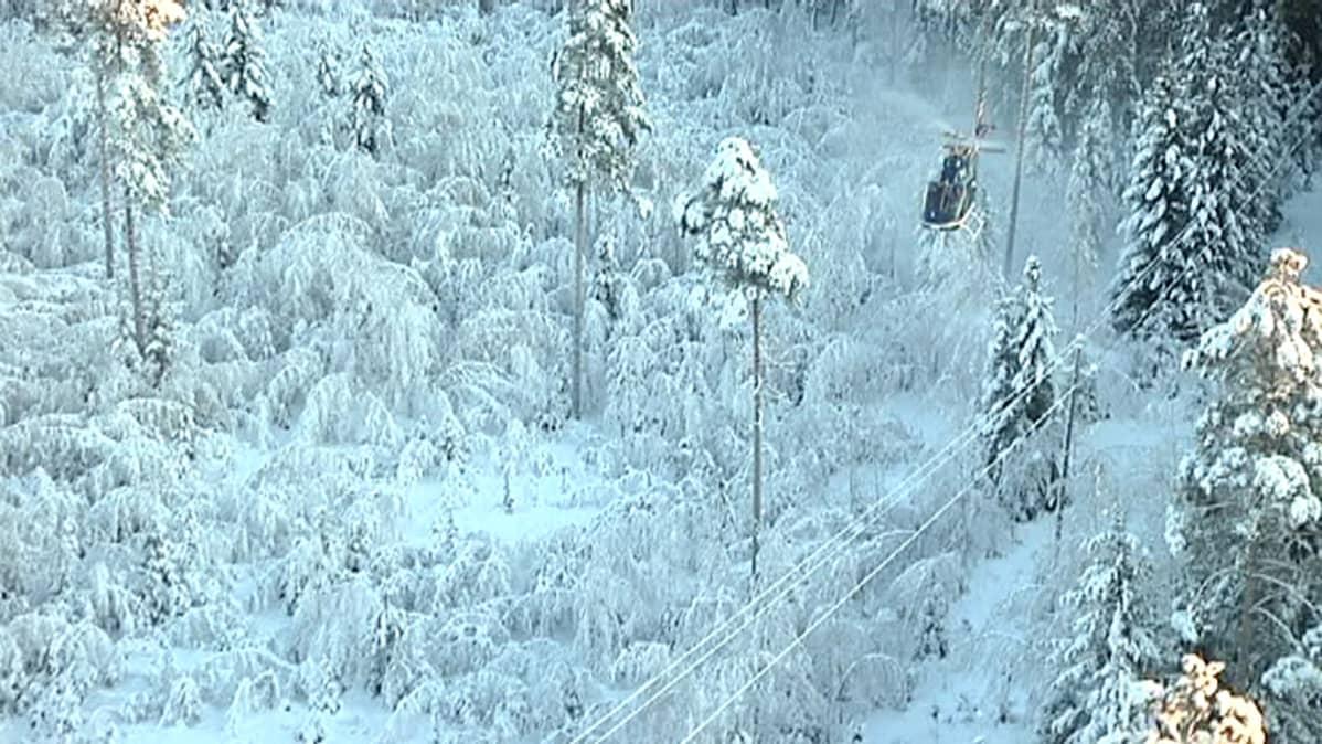 Helikopteri lumisen metsän yllä.