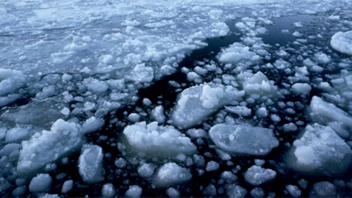 Jäälohkareita ja sohjoa meressä.
