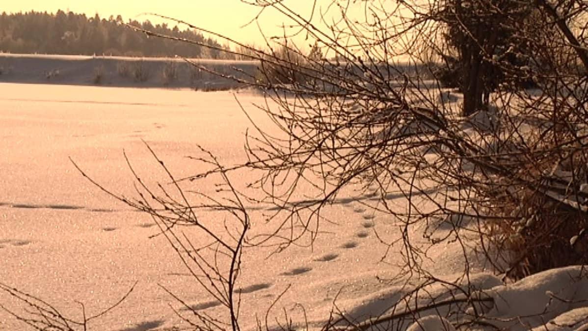 Maarian altaalla voi ulkoilla kauniissa talvimaisemissa.