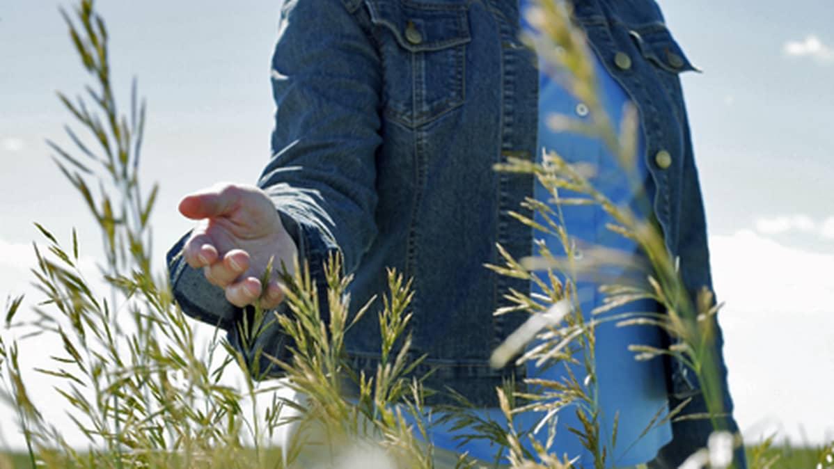 Henkilö koskettaa kädellään kasveja.