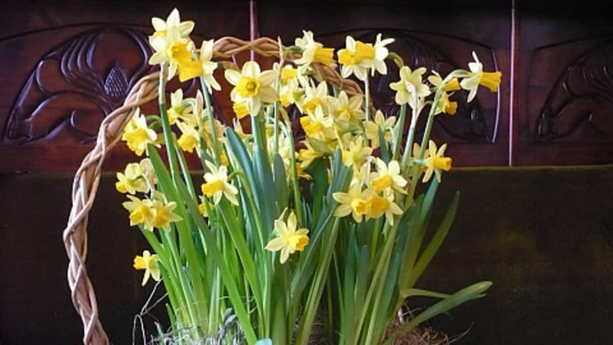 Kukat, kortit, munat ja muut pääsiäisen koristeet löytyivät jo 100 vuotta sitten hämeenlinnalaisista säätyläiskodeista.