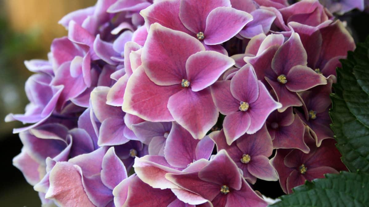Äitienpäivän kukat valitaan päivänsankarin lempivärin mukaan.