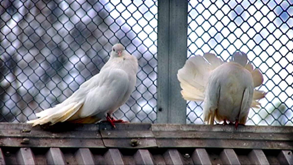 Lintuja Sorsapuiston lintutarhalla