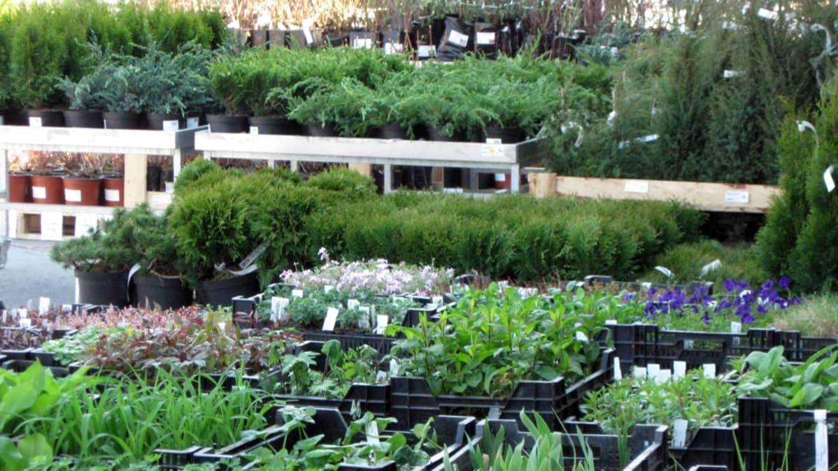 Havuja ja muita kasveja myymälässä.