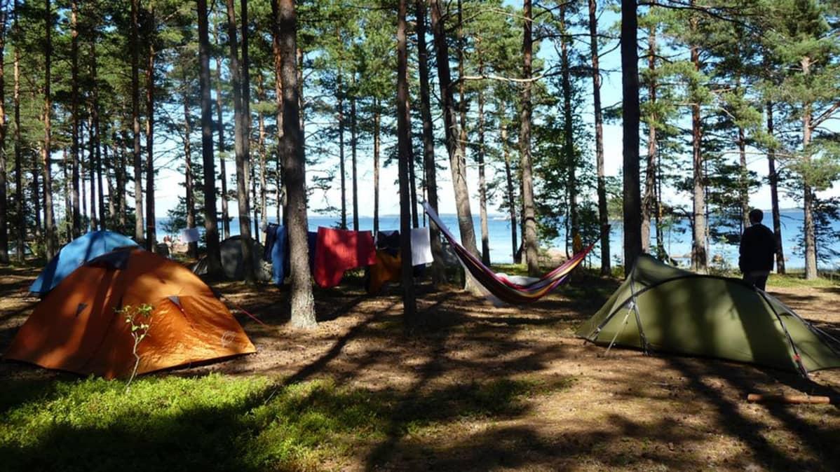 Telttoja metsässä