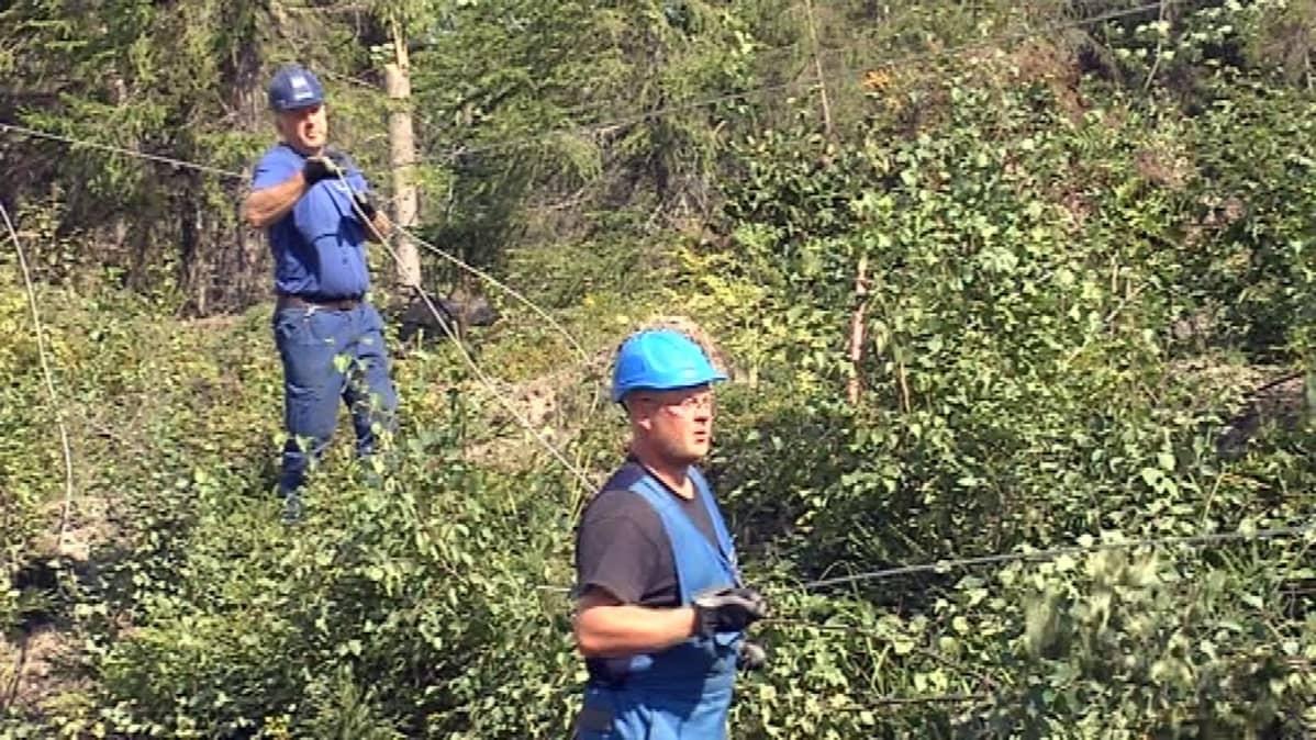 Sähkömiehet korjaavat puiden kaatamia sähkölinjoja.