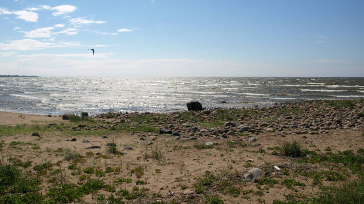 Marjaniemen ranta Hailuodossa.