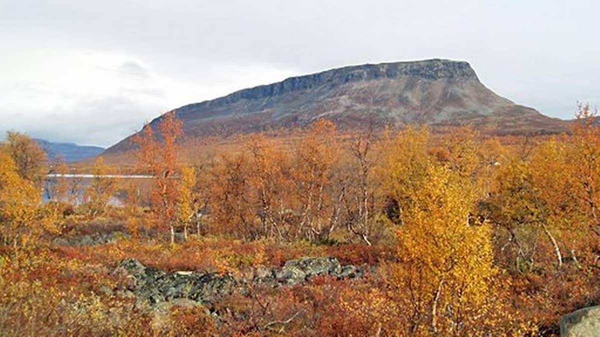 Kilpisjärven mahtava Saana