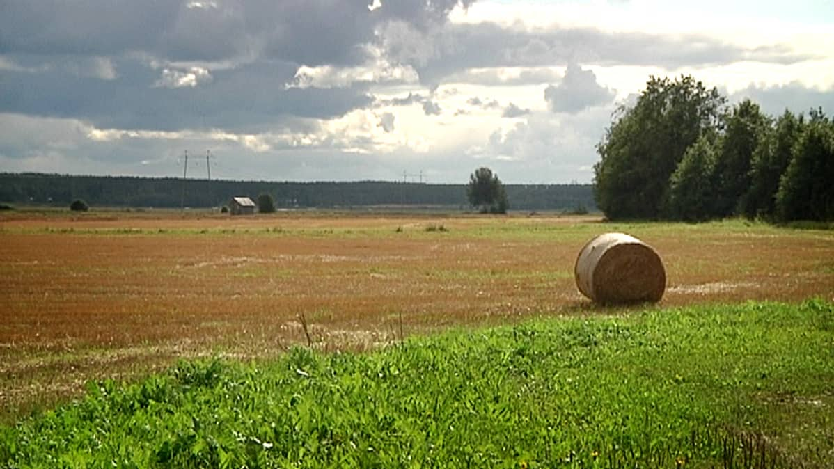 Bioetanolista toivotaan uutta eloa Lakeuden Alajoen pelloille.