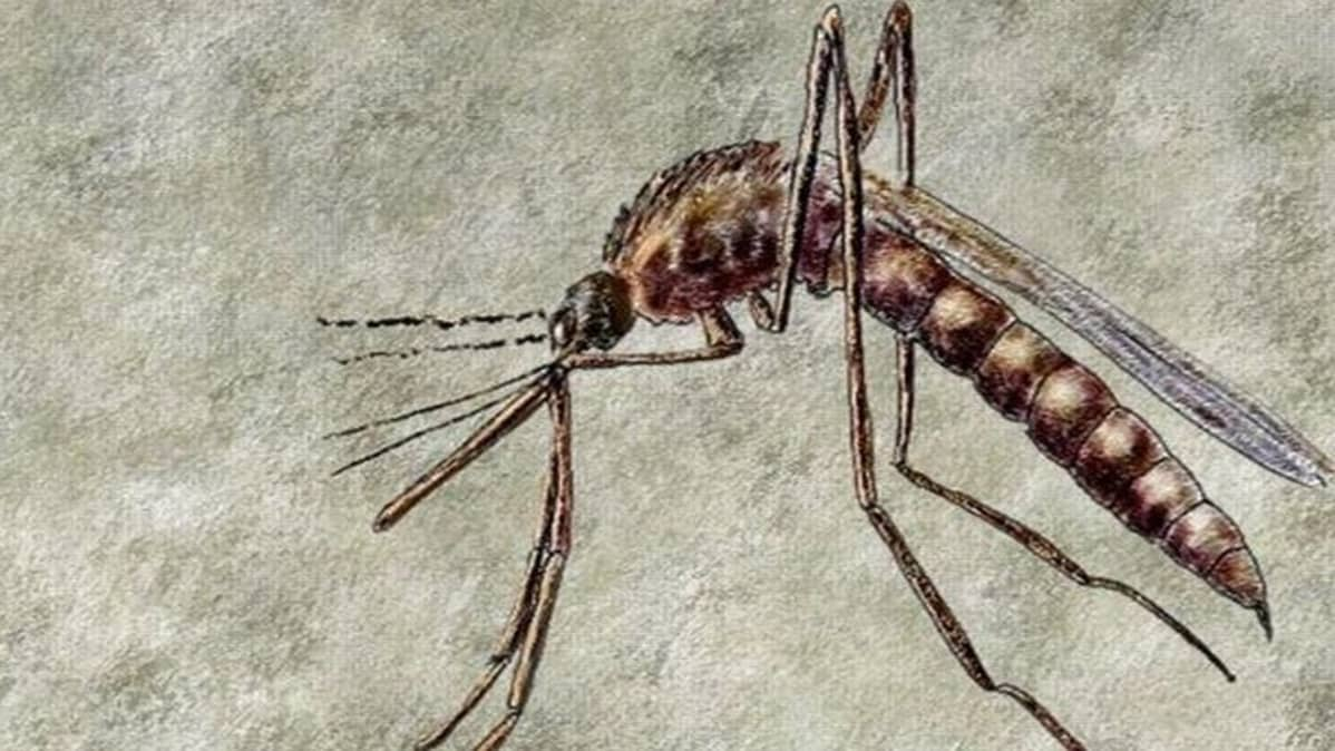 Dengue-kuumeen levittäjä