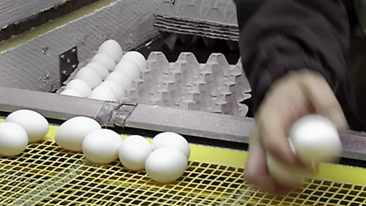 Mikä tekee munaa Iso